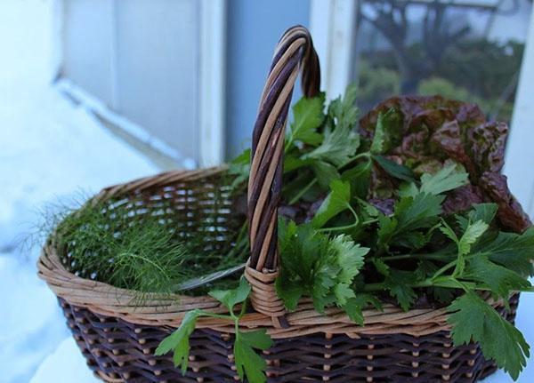 свежая зелень к столу