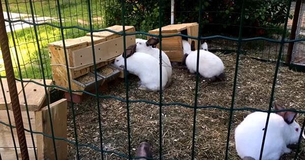 вольер для летнего содержания кроликов