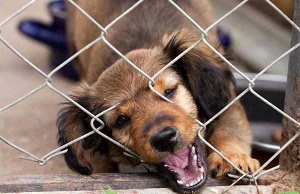 собака грызет сетку