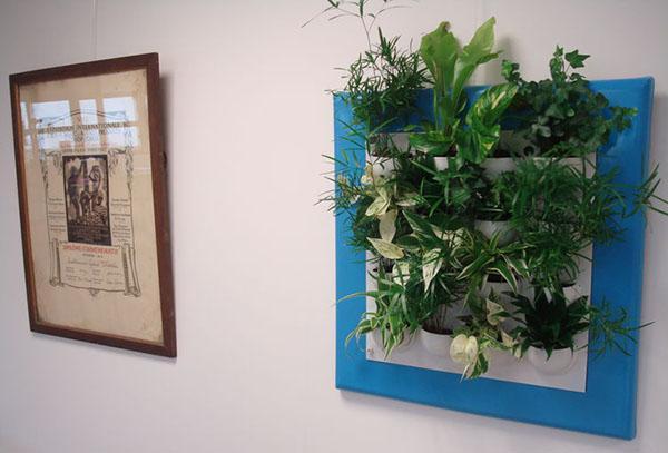 Живые картины на стену, подбор растений, как сделать, фото, видео