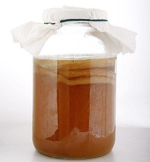 правильное выращивание чайного гриба