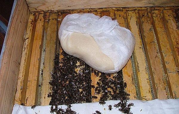 сахарное тесто для пчел