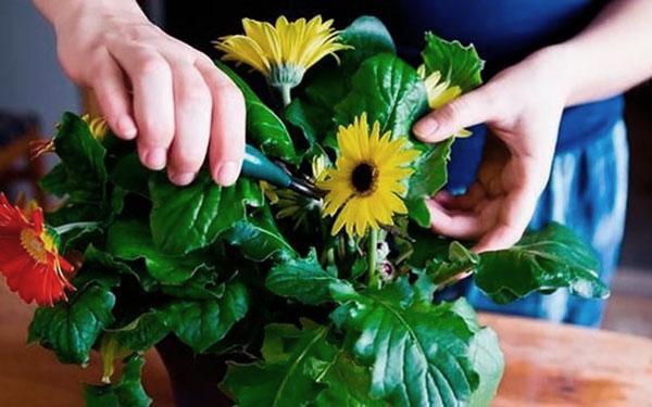 удаляем засохшие цветы