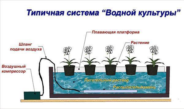 Оборудование гидропоника для выращивания зелени 37