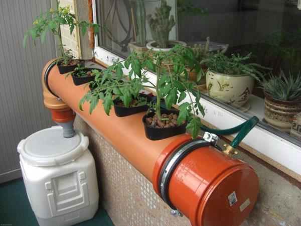 овощи на гидропонике