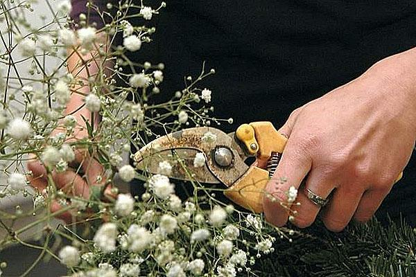 обрезка гипсофилы осенью