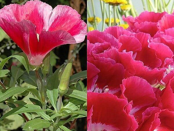 ярко-красные цветы