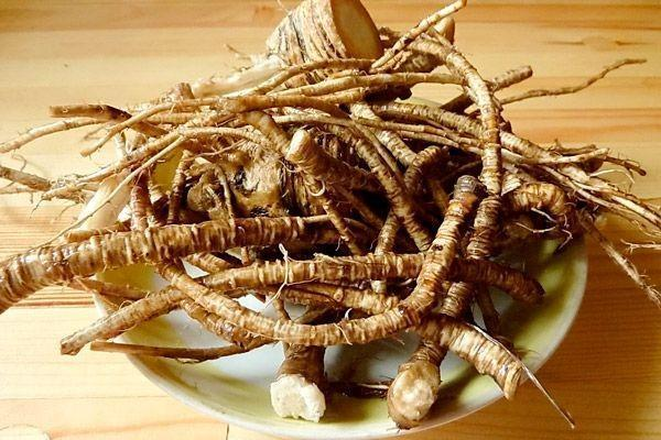 лечебный корень горянки