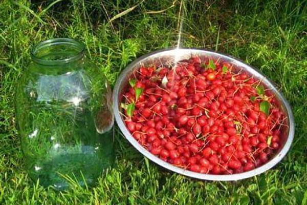 ягоды гуми для зимней заготовки
