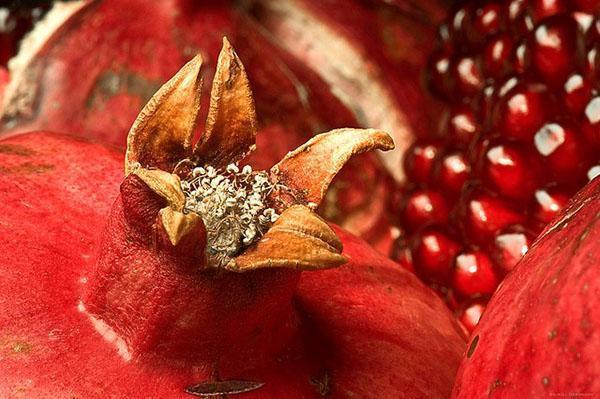 у спелого граната лепестки цветка сухие