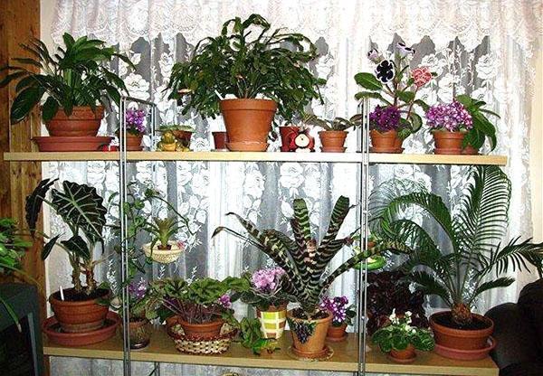 комнатные растения в феврале