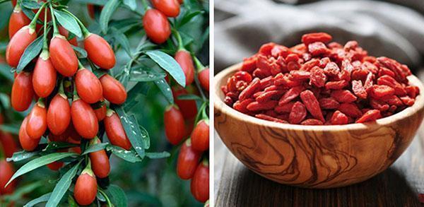 ягоды годжи в свежем и сушенном виде