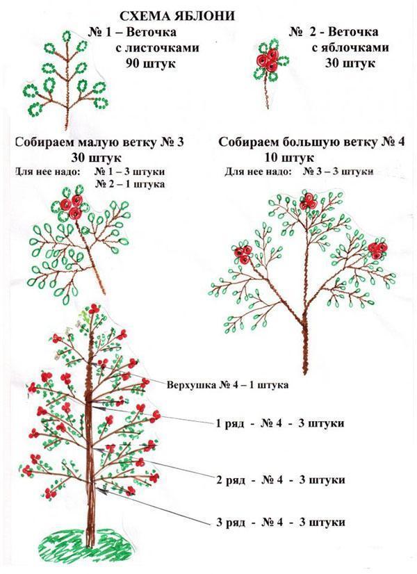 схема яблони