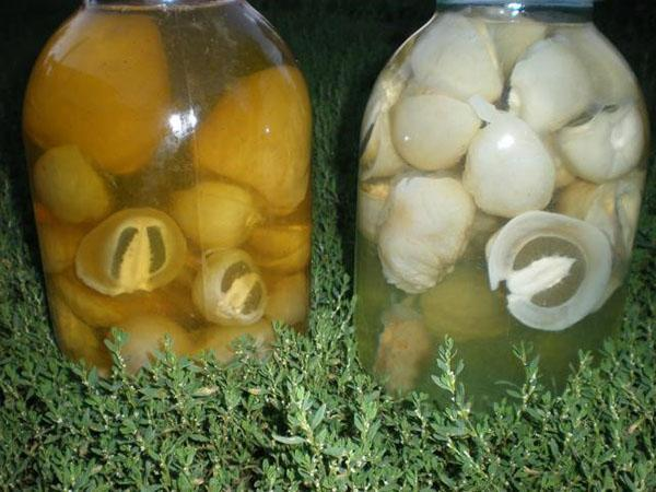 настойка гриба веселка в бутле