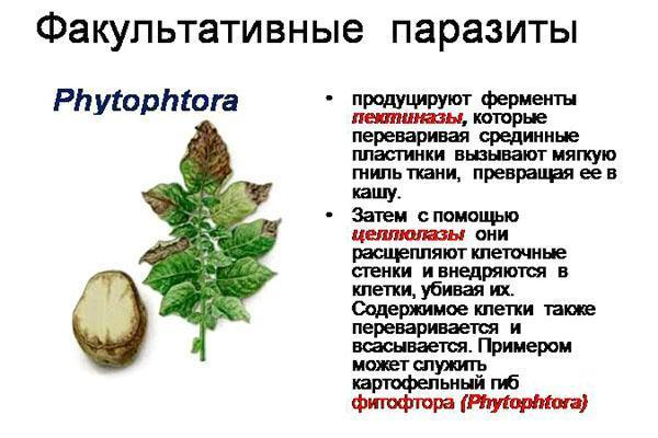 факультативные грибы паразиты