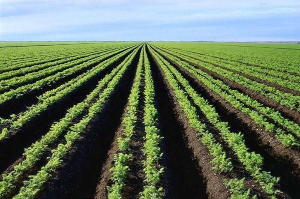 плодородная почва