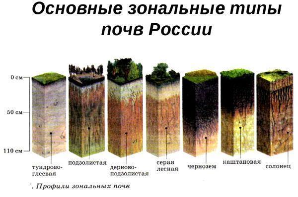 зональные типы почв