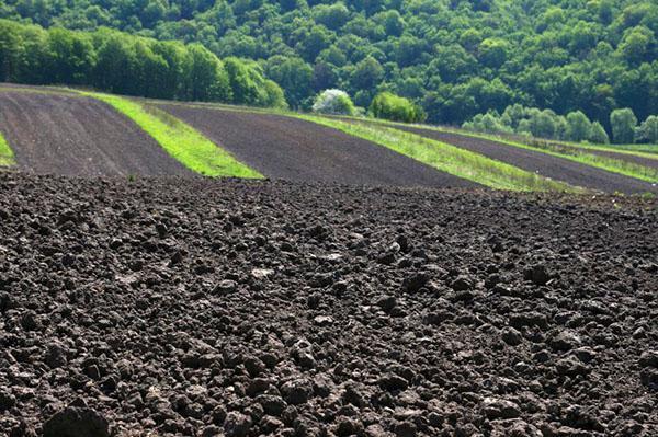 борьба с засолением почвы
