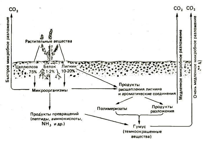 схема образования гумус