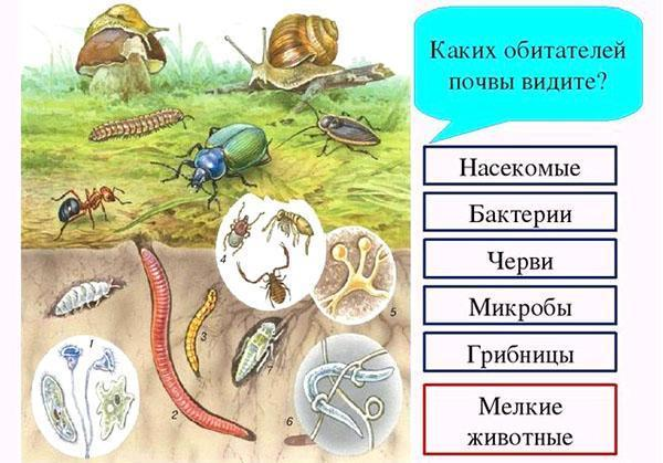 жители почвы