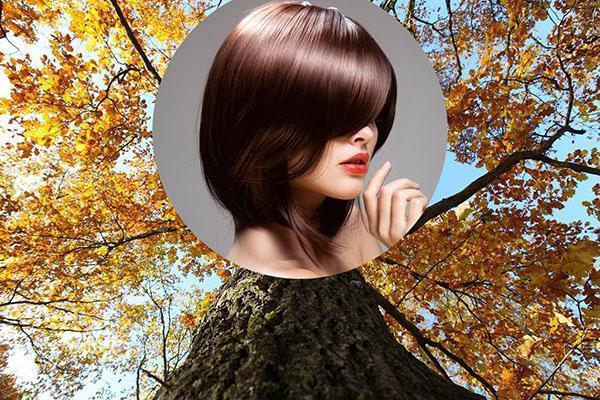 кора дуба для здоровья волос