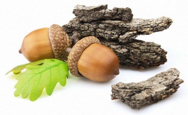 кора и плоды дуба