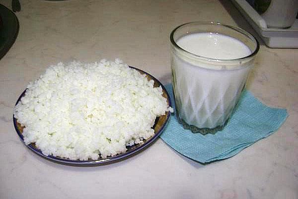 молочный гриб и молоко