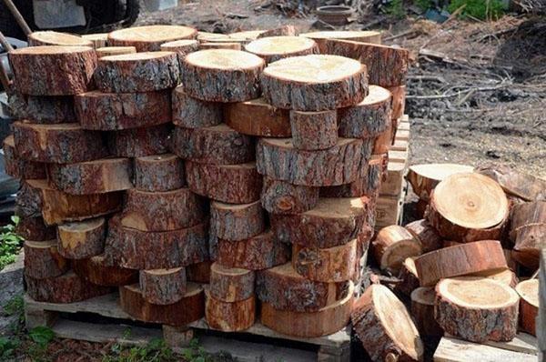 спилы из дерева