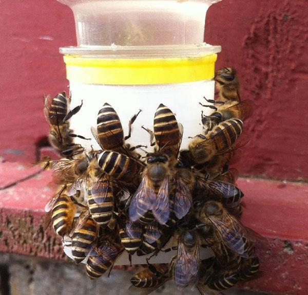 поилка для пчел из Китая