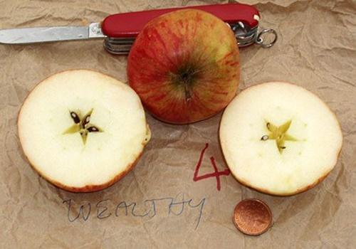 разрезанное яблоко