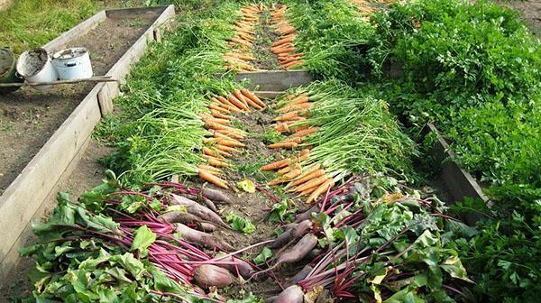урожай овощей без использования химикатов