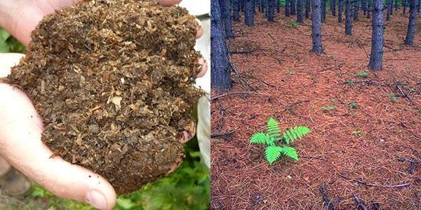 использование перегноя и лиственной почвы