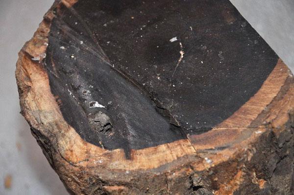спил эбенового дерева