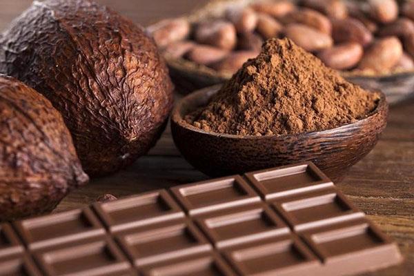 плоды какао дерево и порошок