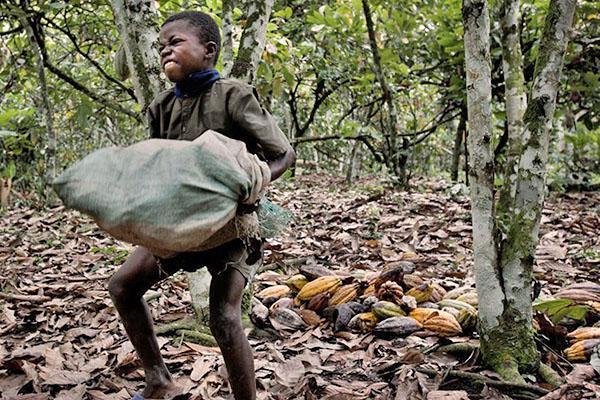 на плантации работают дети