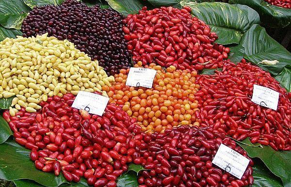 ягоды кизила разных сортов