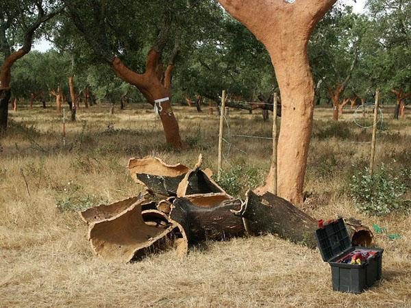 кора пробкового дерева ценный материал