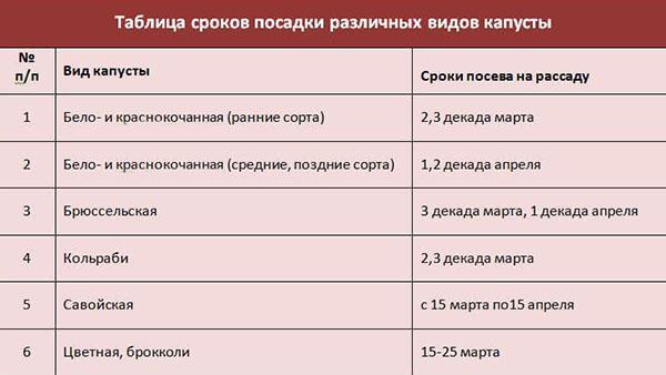 таблица сроков посадки капусты