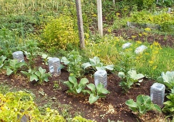 полив каждого корня отдельно