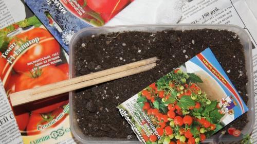 Семена для выращивания томатов 514