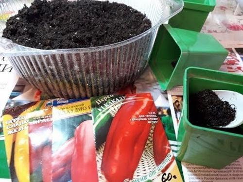 Подготовка семян перца к посадке на рассаду 27