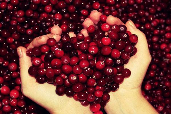 выбираем качественную ягоду