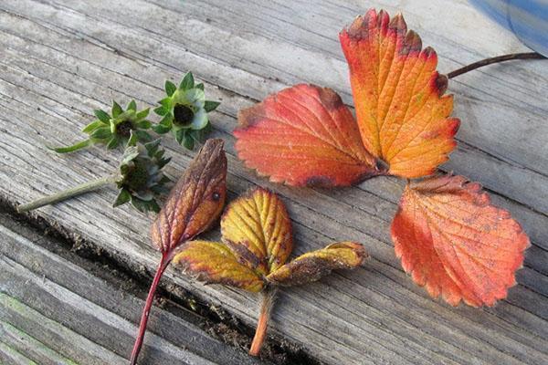 удаляем старые листы и цветоносы