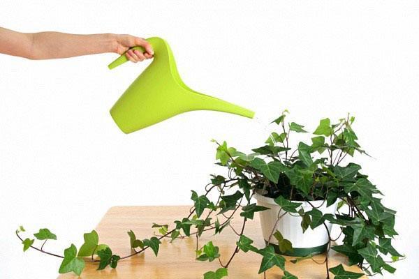 полив ампельных растений