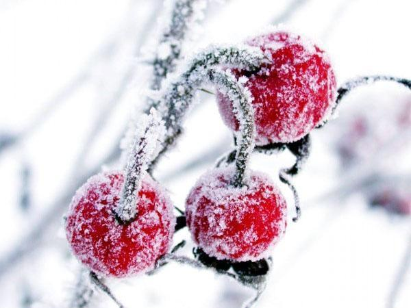 клюква под снегом
