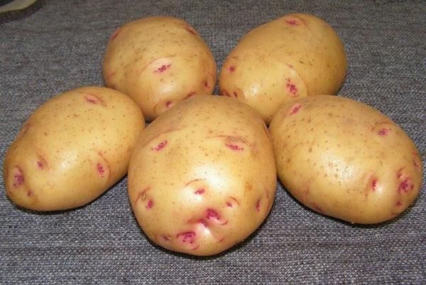 выбираем хороший картофель