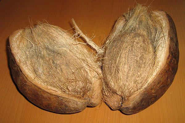 скорлупа кокосового ореха