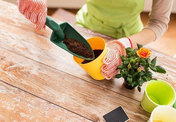выращиваем лизиантус с заботой