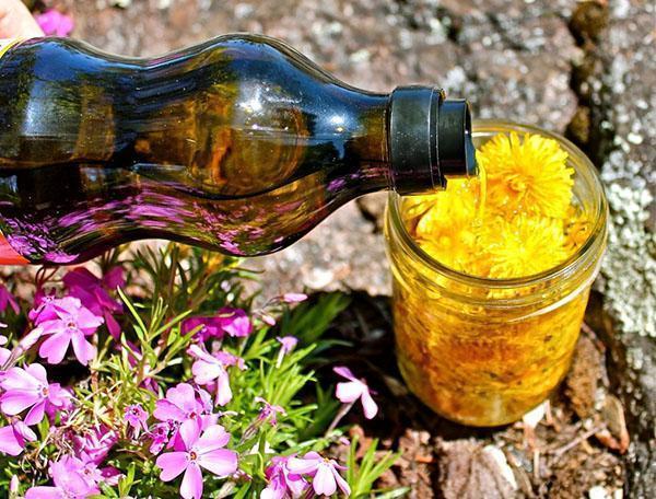 масло из одуванчиков