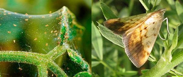 борьба с вредителями биологическими препаратами